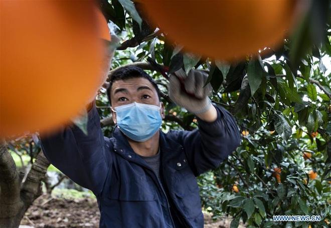 Virus corona mới ngày 12/2: Hồ Bắc thêm 1.638 ca nhiễm, 94 ca tử vong, dịch có hy vọng dập tắt trước tháng 4 - Ảnh 2.