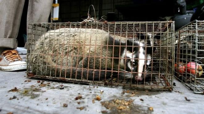 Tiêu thụ thịt động vật hoang dã tại TQ: Khi những bài thuốc hàng trăm năm phản tác dụng - Ảnh 2.