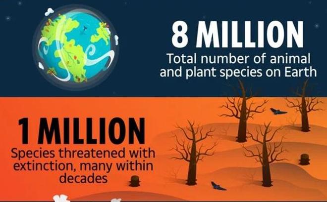 Trái Đất sẽ mất 1/3 các loài động vật và thực vật trong 50 năm nữa?