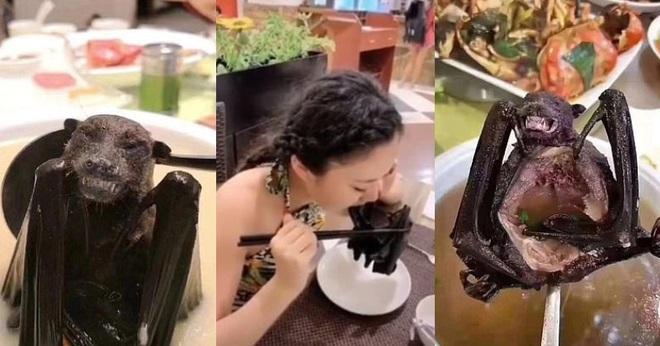 Giữa đại dịch corona: Loạt sao Hoa - Hàn gánh hậu quả lớn vì lộ clip ăn thịt động vật hoang dã  - Ảnh 1.
