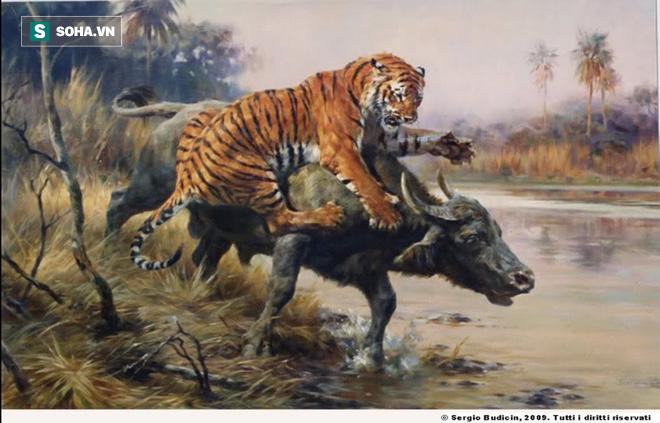 Mãnh hổ tiếp cận trâu nước từ phía sau: Cặp sừng của con mồi khiến nó phải bỏ chạy - Ảnh 1.