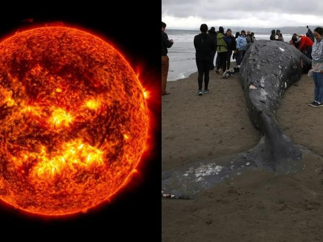 Giải mã: Cá voi mắc cạn hàng loạt và bí ẩn phía sau những cái chết này là gì? - Ảnh 1.