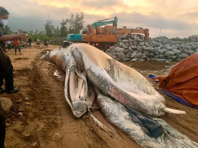 [Ảnh] Cả trăm người làm cơm, lập bàn thờ, thắp hương, chôn xác cá voi nặng hơn 10 tấn trong đêm - Ảnh 7.