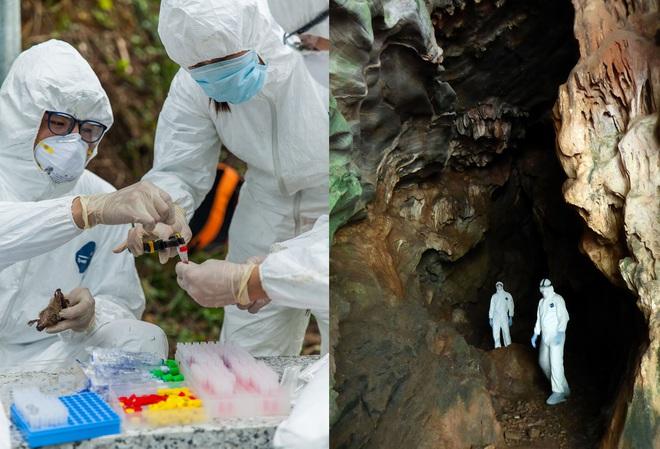 Lời tiên đoán từ hang dơi và lý giải của nhà khoa học Mỹ về sự hình thành các virus mới - Ảnh 2.