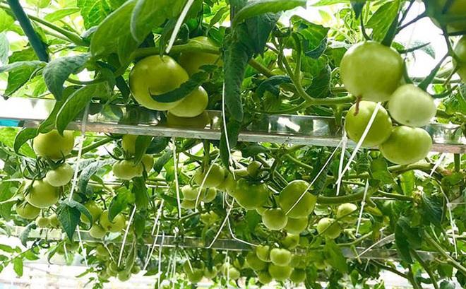 Choáng với trang trại nuôi trồng thập cẩm trên nóc nhà ở giữa Thủ đô