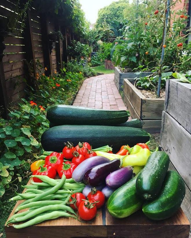 Khu vườn mùa xuân đẹp như tranh vẽ với đủ loại trái cây và rau củ của đôi vợ chồng đam mê trồng trọt - Ảnh 15.