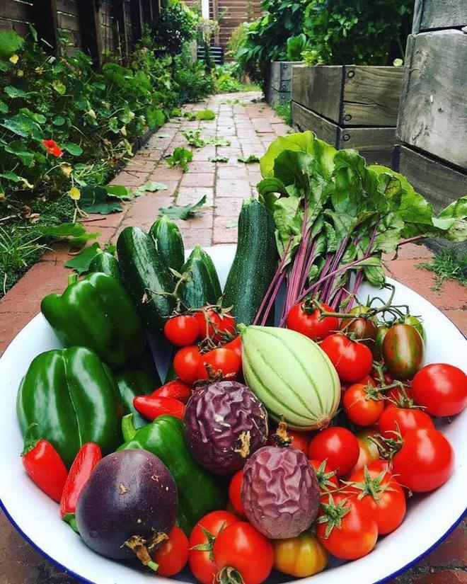 Khu vườn mùa xuân đẹp như tranh vẽ với đủ loại trái cây và rau củ của đôi vợ chồng đam mê trồng trọt - Ảnh 16.