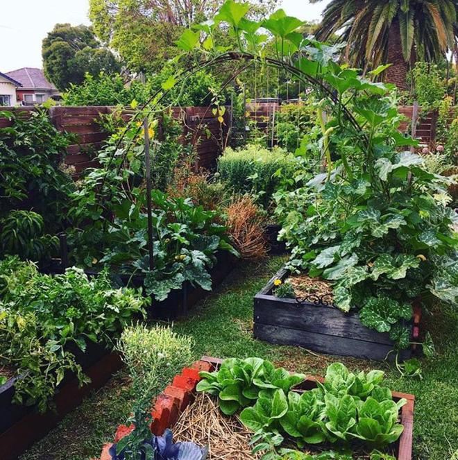Khu vườn mùa xuân đẹp như tranh vẽ với đủ loại trái cây và rau củ của đôi vợ chồng đam mê trồng trọt - Ảnh 10.