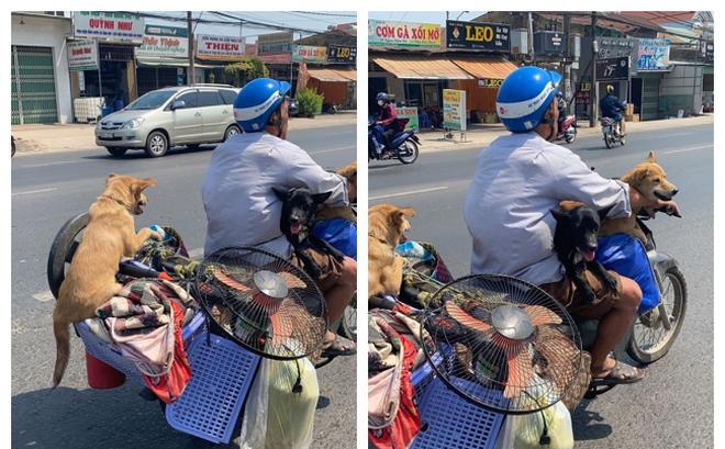 Người đàn ông đèo 3 chú chó trên xe máy, hình ảnh phía sau khiến tất cả bật cười