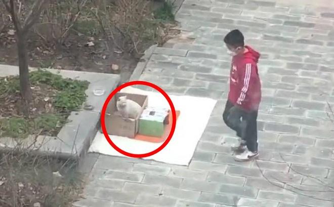 Gặp chú mèo hoang, cậu bé đã có hành động khiến ai chứng kiến cũng tấm tắc ngợi khen