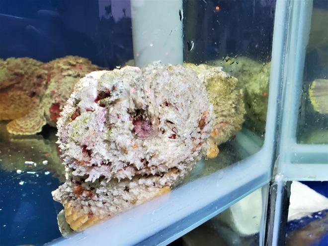 Cá mặt quỷ siêu dữ tợn giá gần 10 triệu đồng/con ở Hà Nội - Ảnh 1.