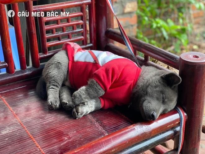 """Lộ diện hội cạ cứng của Nguyễn Văn Dúi, chú chó màu nâu đất xuất hiện khiến dân tình đảo lộn, idol Dúi suýt """"ra rìa"""" - Ảnh 9."""