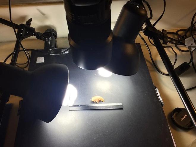 Phát hiện sinh vật nhỏ bằng đồng xu ở nơi sâu nhất Trái Đất: Vì sao các nhà khoa học lo lắng? - Ảnh 5.