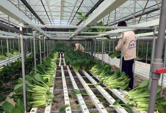 Chủ doanh nghiệp ở Lai Châu gửi hàng tấn rau ủng hộ người dân khu cách ly dịch Covid-19 ở Hà Nội - Ảnh 6.