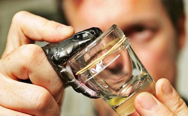 Làm đẹp kinh dị: Giải mã công dụng của nọc rắn hổ mang