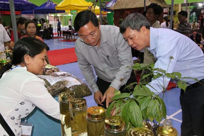 Lo Covid-19, Quảng Nam tổ chức chợ sâm Ngọc Linh tiền tỉ qua online - Ảnh 1.