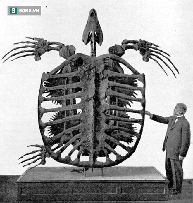 Ảnh chụp năm 1902 về hóa thạch rùa kỷ Phấn Trắng.