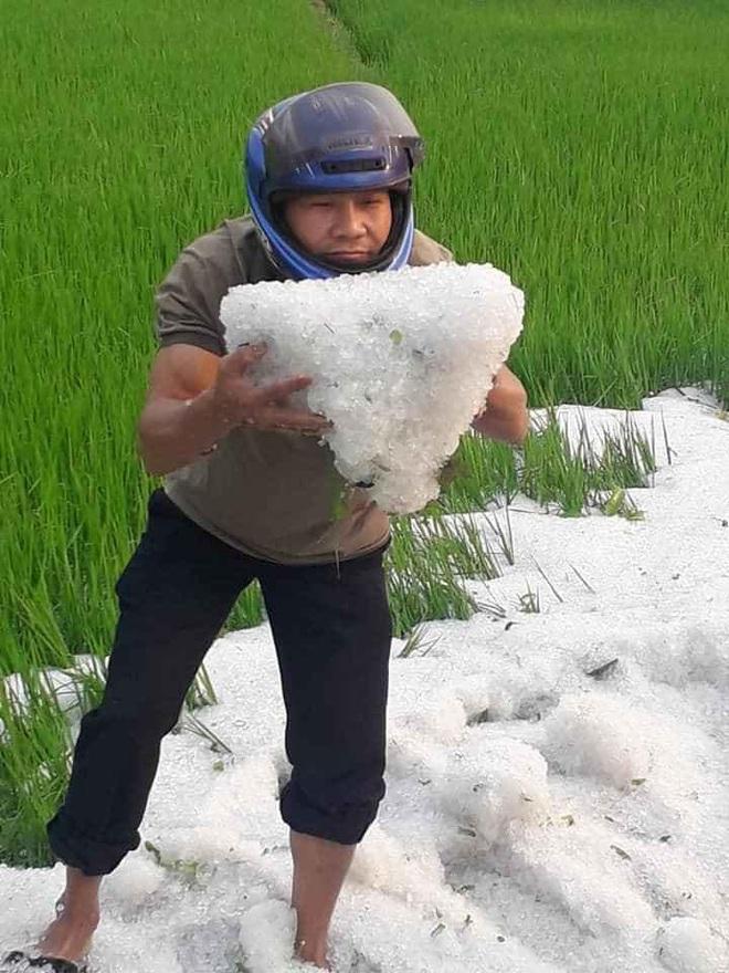 Mưa đá phủ trắng ruộng vườn ở Điện Biên, Sơn La, Hòa Bình - Ảnh 2.