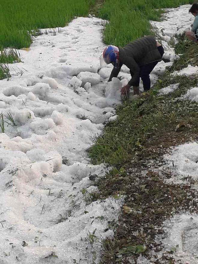 Mưa đá phủ trắng ruộng vườn ở Điện Biên, Sơn La, Hòa Bình - Ảnh 5.