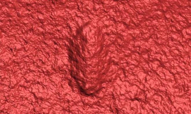 Sinh vật chỉ ăn và ị này có thể chính là tổ tiên lâu đời nhất của con người - Ảnh 2.