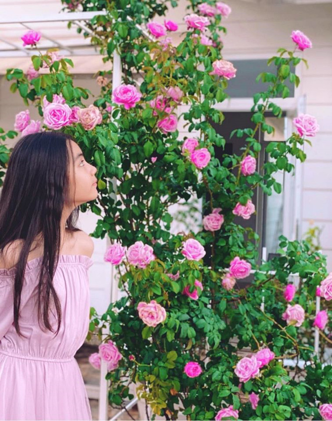 Bà xã Quyền Linh khoe thành quả thu hoạch hoa trái sai trĩu trong căn biệt thự 21 tỷ, được cả chồng lẫn 2 cô con gái xinh đẹp phụ giúp - Ảnh 12.