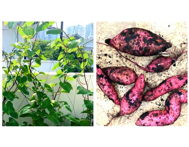 Bà xã Quyền Linh khoe thành quả thu hoạch hoa trái sai trĩu trong căn biệt thự 21 tỷ, được cả chồng lẫn 2 cô con gái xinh đẹp phụ giúp - ảnh 14