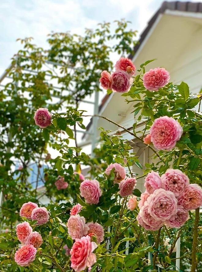 Bà xã Quyền Linh khoe thành quả thu hoạch hoa trái sai trĩu trong căn biệt thự 21 tỷ, được cả chồng lẫn 2 cô con gái xinh đẹp phụ giúp - ảnh 17