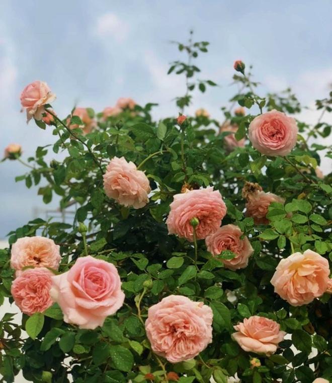 Bà xã Quyền Linh khoe thành quả thu hoạch hoa trái sai trĩu trong căn biệt thự 21 tỷ, được cả chồng lẫn 2 cô con gái xinh đẹp phụ giúp - Ảnh 18.