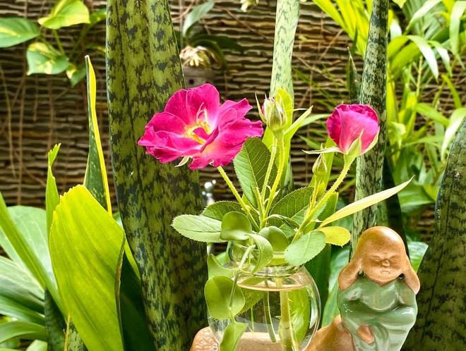 Bà xã Quyền Linh khoe thành quả thu hoạch hoa trái sai trĩu trong căn biệt thự 21 tỷ, được cả chồng lẫn 2 cô con gái xinh đẹp phụ giúp - ảnh 19