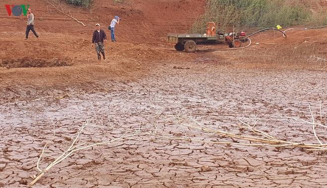 Nhiều công trình thủy lợi hết nước, hàng nghìn ha cây trồng mất trắng - Ảnh 1.