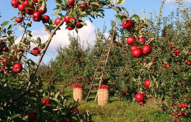 Từ chuyện quả táo, có thể nhận biết một người sẽ giàu hay nghèo: Ai cũng nên biết để thay đổi vận mệnh của chính mình - Ảnh 1.