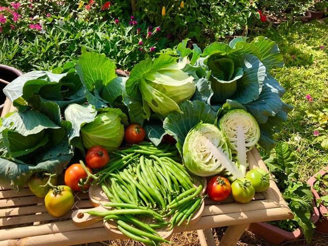 Ở nhà tránh dịch mới vài ngày, hội chị em đã bắt đầu đua nhau khoe vườn rau tại nhà, quả trĩu cành - ảnh 1
