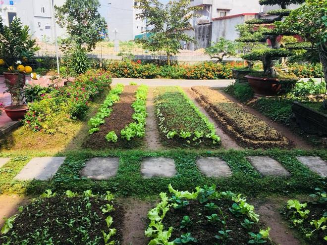 Ở nhà tránh dịch mới vài ngày, hội chị em đã bắt đầu đua nhau khoe vườn rau tại nhà, quả trĩu cành - ảnh 18