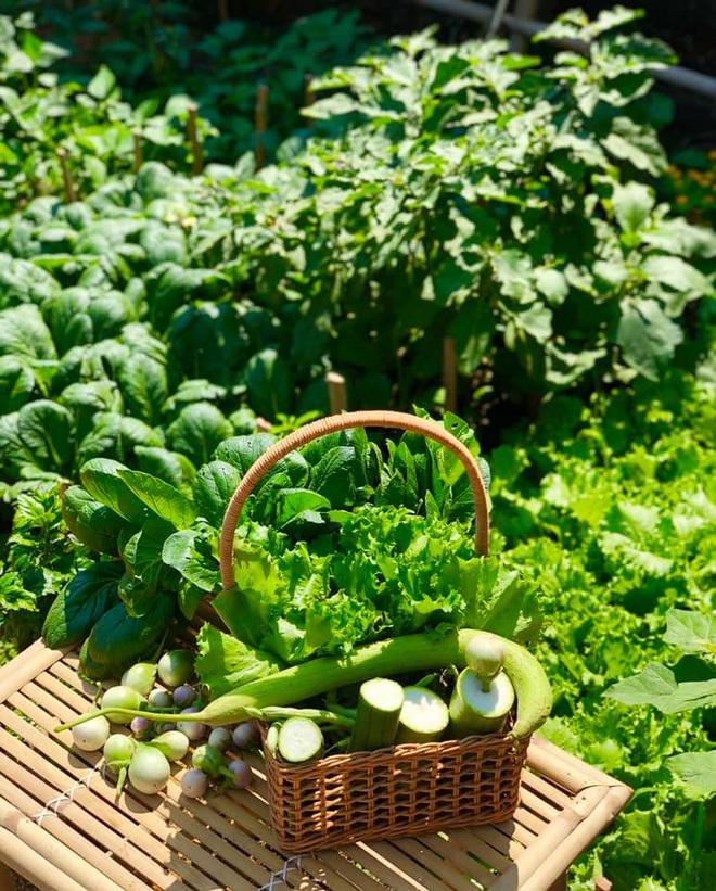 Ở nhà tránh dịch mới vài ngày, hội chị em đã bắt đầu đua nhau khoe vườn rau tại nhà, quả trĩu cành - ảnh 3