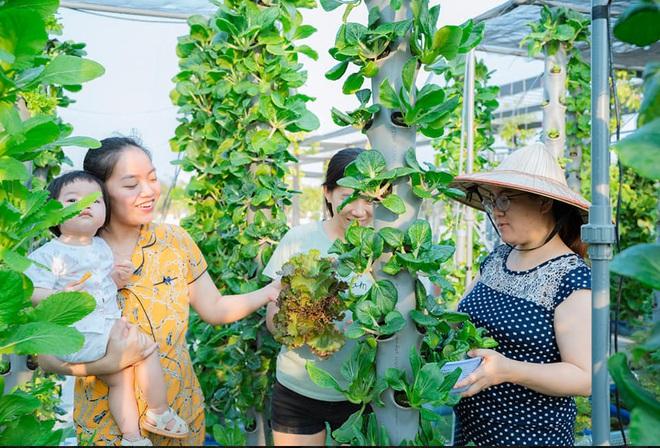 Ở nhà tránh dịch mới vài ngày, hội chị em đã bắt đầu đua nhau khoe vườn rau tại nhà, quả trĩu cành - ảnh 25