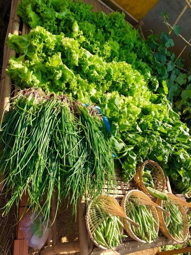 Ở nhà tránh dịch mới vài ngày, hội chị em đã bắt đầu đua nhau khoe vườn rau tại nhà, quả trĩu cành - ảnh 4