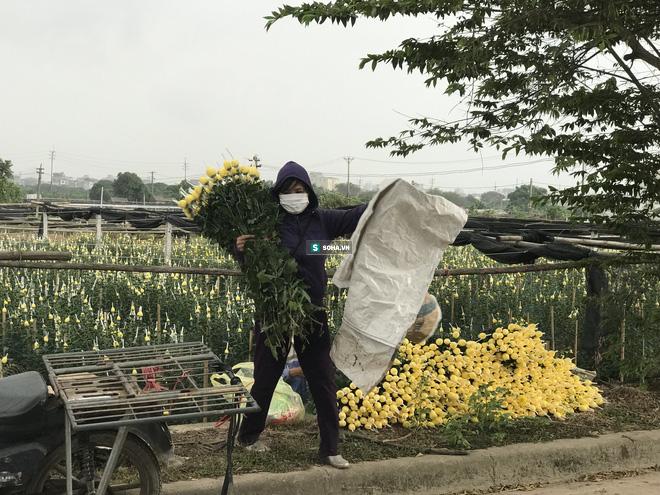 """Làng hoa lớn nhất Hà Nội ủ rũ vì Covid-19: """"Chắc phải bán đất để bù lỗ - Ảnh 12."""
