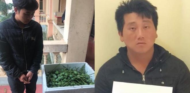 2 thanh niên mang gần 5 yến quả thuốc phiện tươi đi tiêu thụ trong đêm thì bị bắt - Ảnh 1.