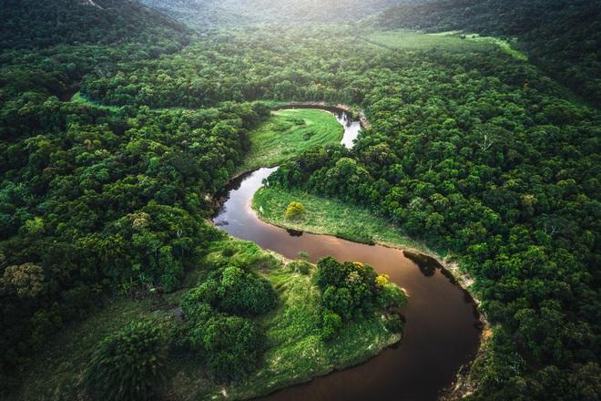 Rừng Amazon gần như đã bão hòa và có thể chuyển sang dạng thải khí CO2 trong 15 năm nữa - Ảnh 1.