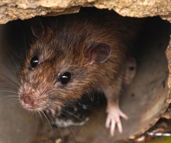 Những bằng chứng khủng khiếp chứng minh biến đổi khí hậu đã giải phóng virus bệnh tật từ động vật hoang dã vào con người - Ảnh 10.