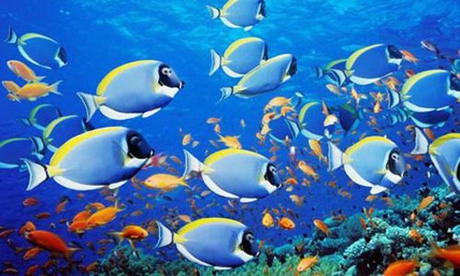 1001 thắc mắc: Cá có bao giờ bị khát không, chúng uống nước như thế nào? - Ảnh 1.