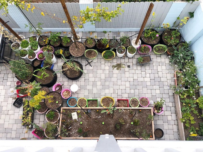 Mảnh sân nhỏ là nơi Fanny trồng nhiều rau củ quả.