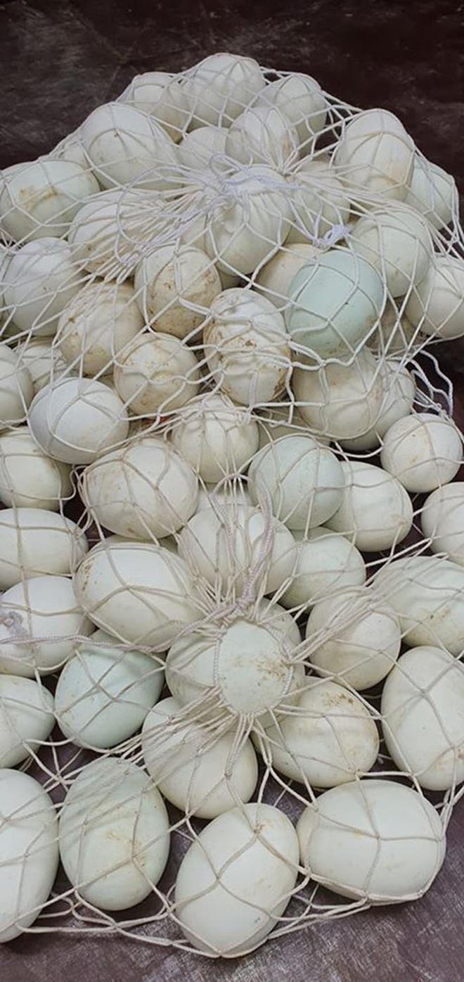 Mua trứng vịt lộn, đừng đặt hết niềm tin vào người bán hàng mà thất vọng, dắt túi mẹo sau để chọn 10 quả mới và non cả 10 - Ảnh 3.