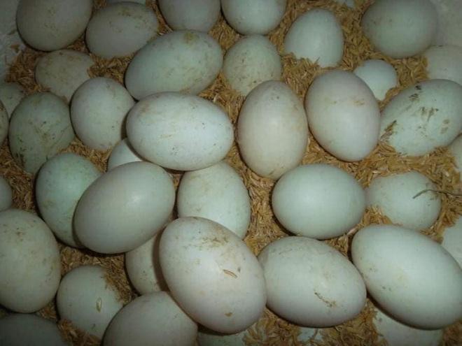 Mua trứng vịt lộn, đừng đặt hết niềm tin vào người bán hàng mà thất vọng, dắt túi mẹo sau để chọn 10 quả mới và non cả 10 - Ảnh 5.