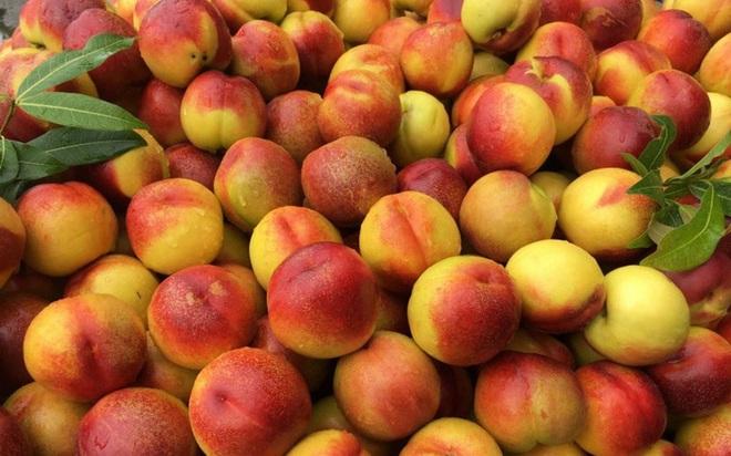 Những trái cây tốt cho sức khỏe và hệ miễn dịch giữa mùa dịch Covid-19 - Ảnh 1.