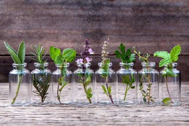 8 loại hương hoa có thể giúp diệt và xua đuổi muỗi trong nhà thích hợp cho chị em dùng vào những ngày hè - Ảnh 3.