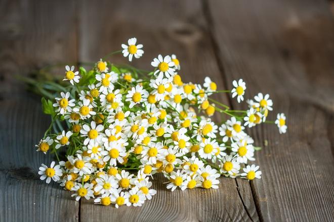 8 loại hương hoa có thể giúp diệt và xua đuổi muỗi trong nhà thích hợp cho chị em dùng vào những ngày hè - Ảnh 6.