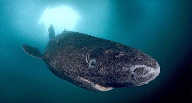 1001 thắc mắc: Loài động vật nào sống cả 1.000 năm? - Ảnh 4.
