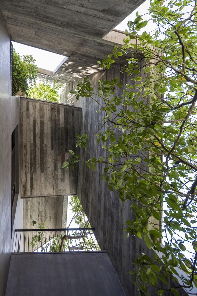 Hạ Long: Sống ở biệt thự mà không khác gì cuộc sống trong rừng - Ảnh 8.