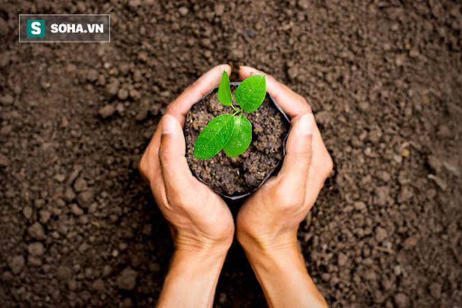 5 lợi ích sức khỏe vô giá khi trồng cây trong nhà: Muốn khỏe mạnh hãy sớm dựa vào cây! - Ảnh 1.